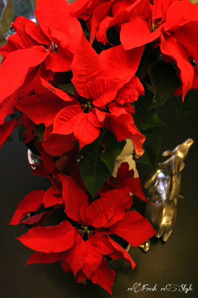 Christmas in the kitchen - budget decorating ideas -  poinsettias galore