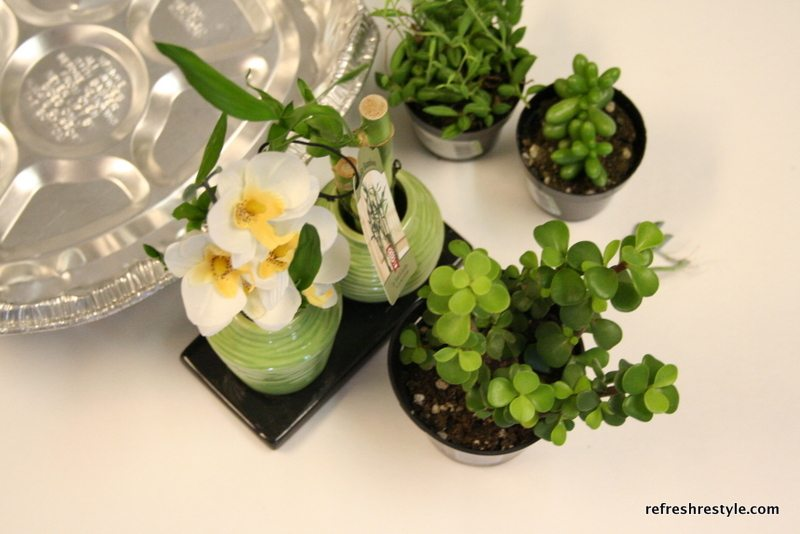 Succulents to use in a mini fairy garden.