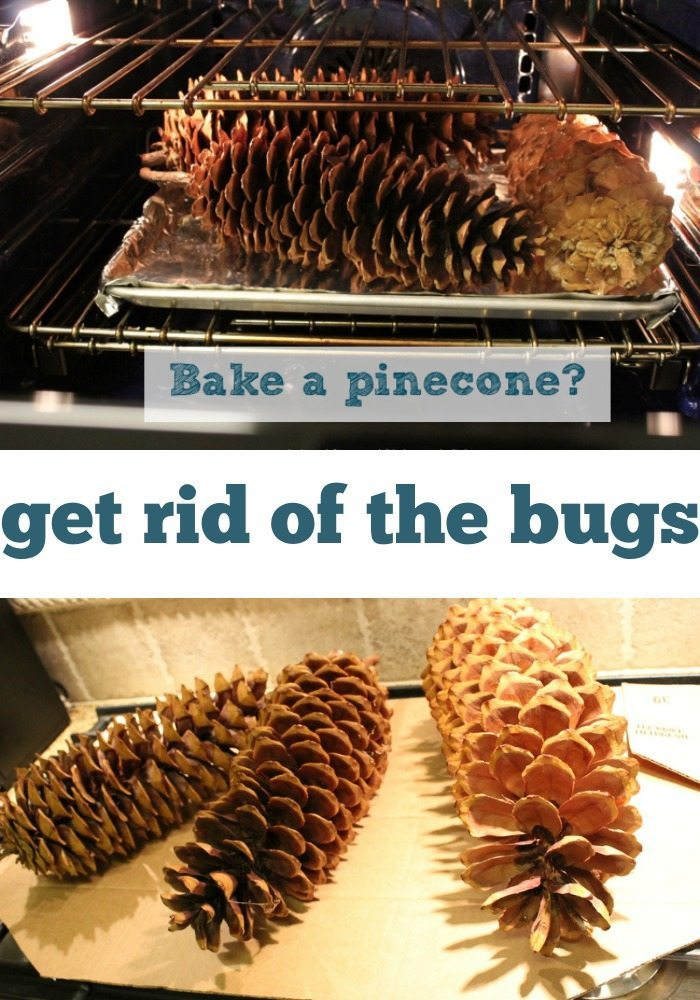 Bake a pinecone before crafting with it.