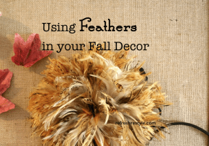 Fall Feathers