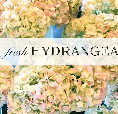 Fresh Hydrangeas