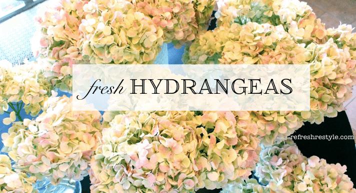 Fresh Hydranges