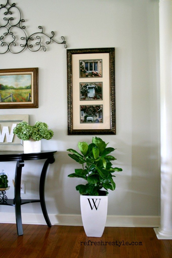 Fiddle leaf fig tree -  beautiful plant