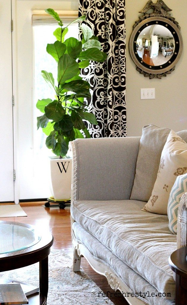 Awesome Fiddle leaf fig tree