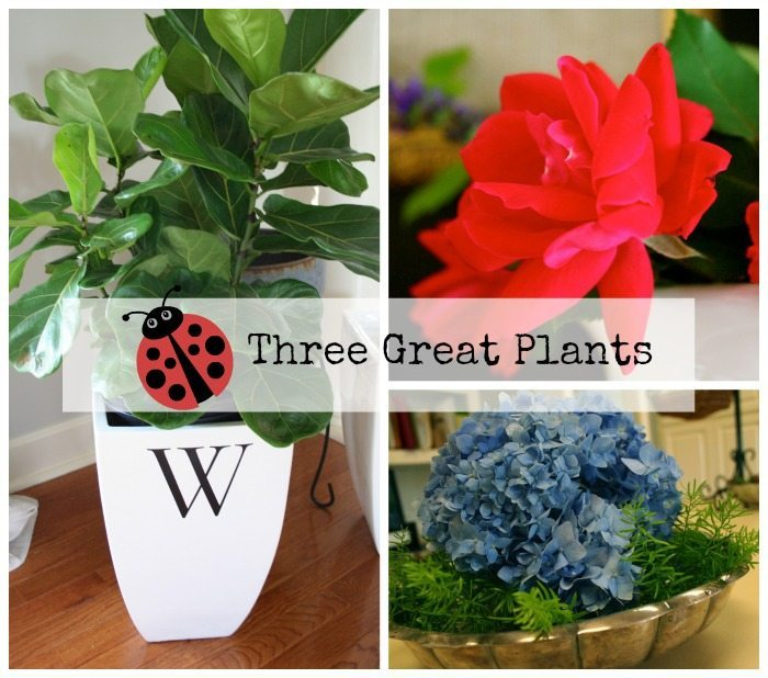 You need these great plants!