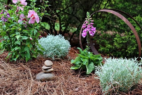 A little corner in the garden filled with color, Rose of Sharon and Foxglove