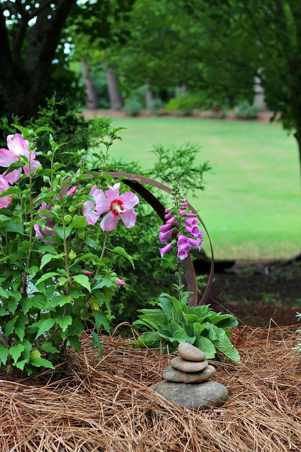 Add color to a corner of you garden with Rose of Sharon