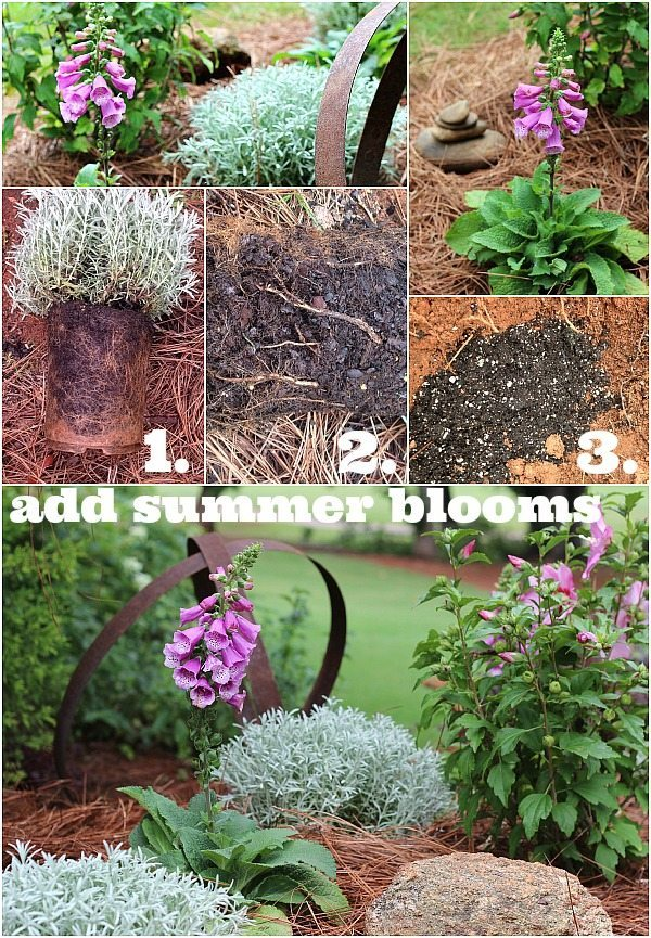 How to add color in your garden with summer blooms