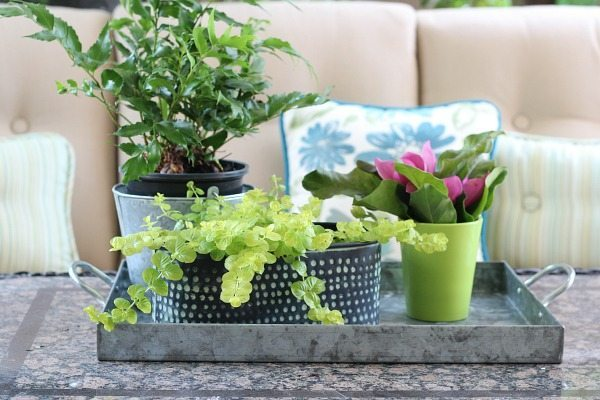 Plants in a galvanized tray