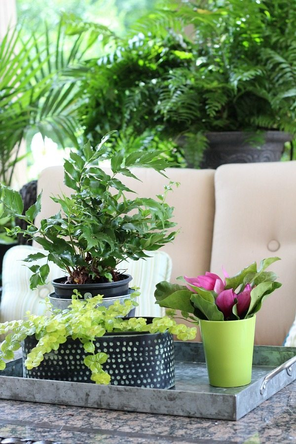 Plants on the patio