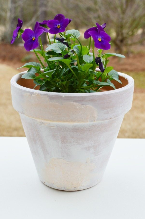 Aged clay pots perfect for planting spring pansies
