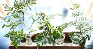 Barn wood do it yourself planter box great for table - centerpiece filled with ferns