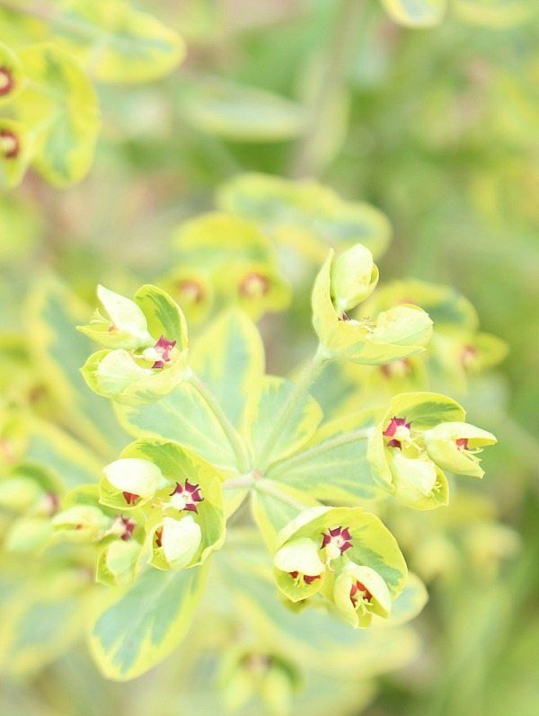 Healthy Monrovia Perennials - great plants for year after year performance