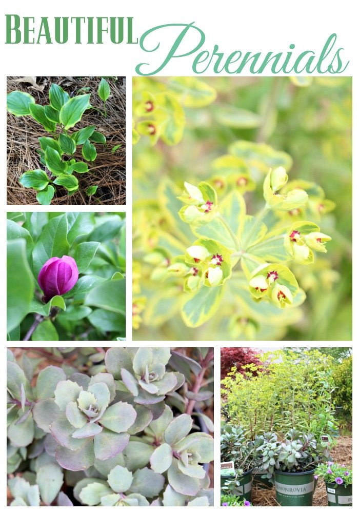 Beautiful Perennials plants that keep giving year after year