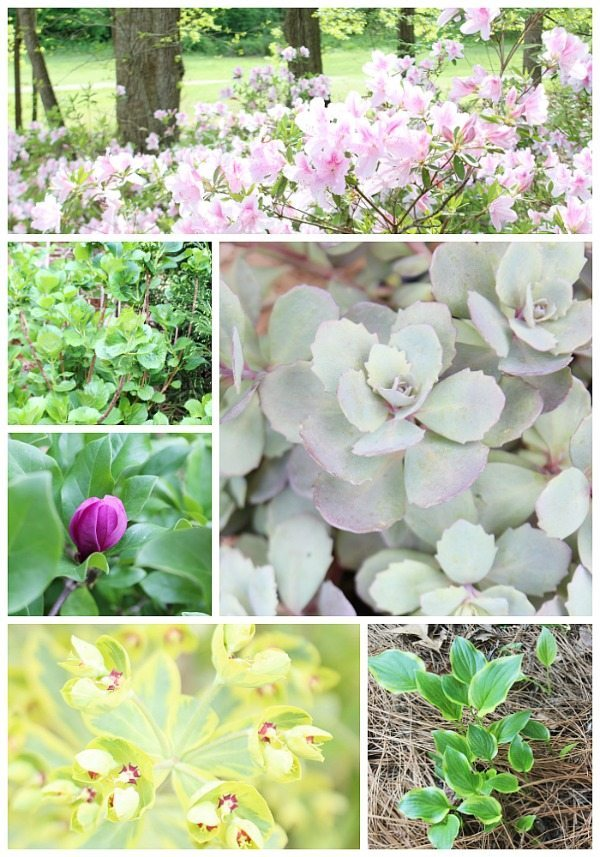 Monrovia Perennials - great plants for year after year performance