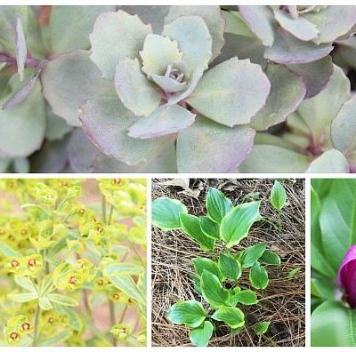 Garden Ideas Monrovia Perennials
