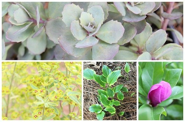 Planning my garden with Monrovia Perennials