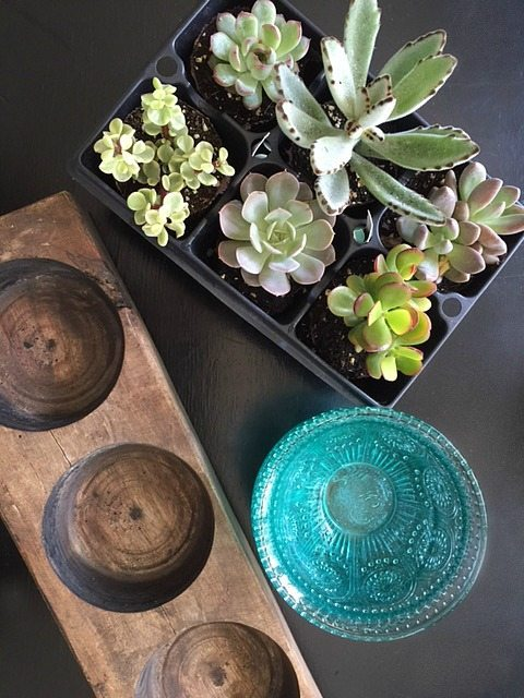 How to Succulents in Pioneer Woman bowl in a vintage sugar mold from Refresh Restyle
