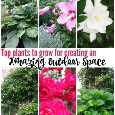 Garden Ideas: Top Plants for Outdoor Spaces