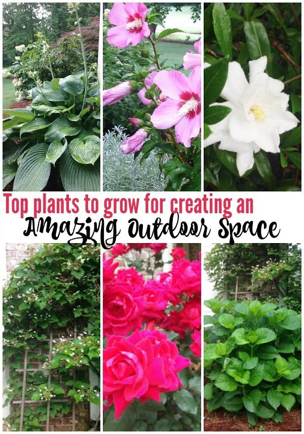 Top plants to grow for creating an amazing outdoor space at Refresh Restyle