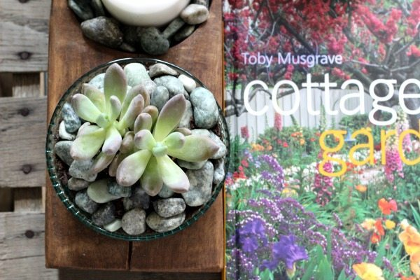Succulents on the coffee table at Refresh Restyle