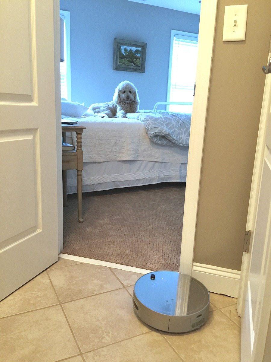 Murphy vs bObi - bObi Pet by bObsweep review