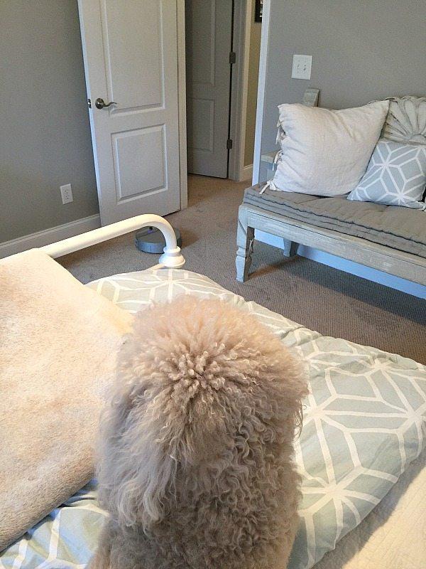 bObi Pet and Murphy Pet - bObi Pet by bObsweep review