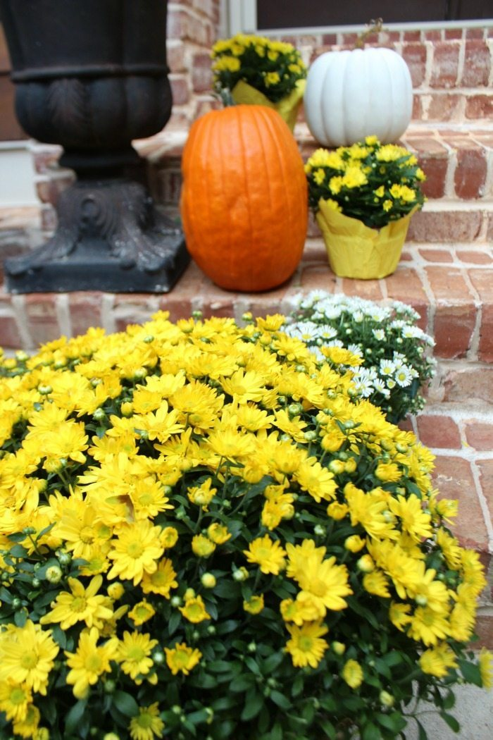 yellow-and-white-mums-with-orange-and-white-pumpkins-for-the-steps-to-the-porch