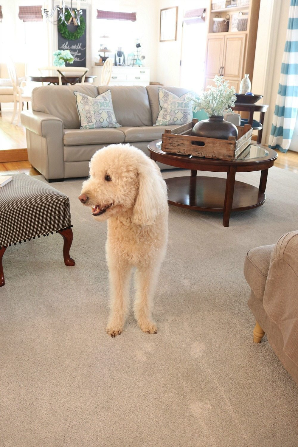 Life Proof Pet proof carpet for the love of pets