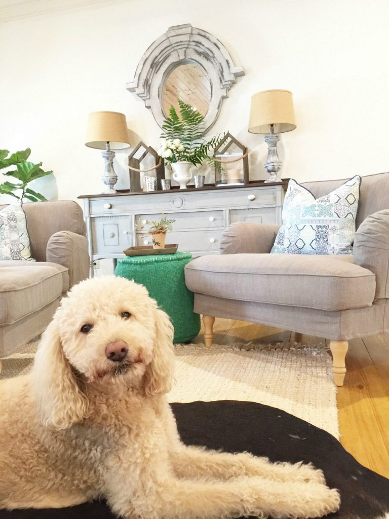 Murphy the labradoodle spring home tour at Refresh Restyle