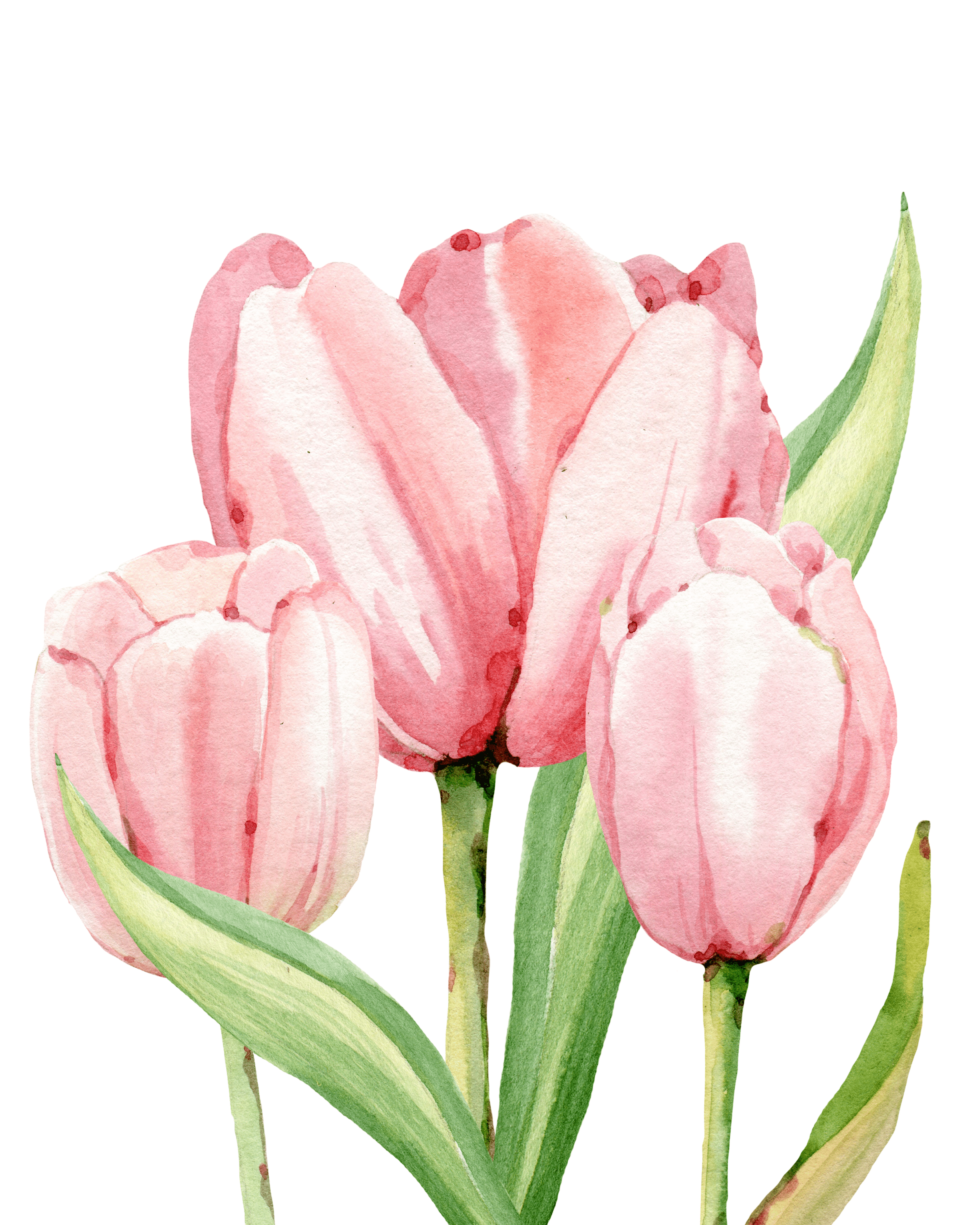 Bright image with tulip printable