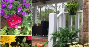5 tips for your spring garden to add color in every corner
