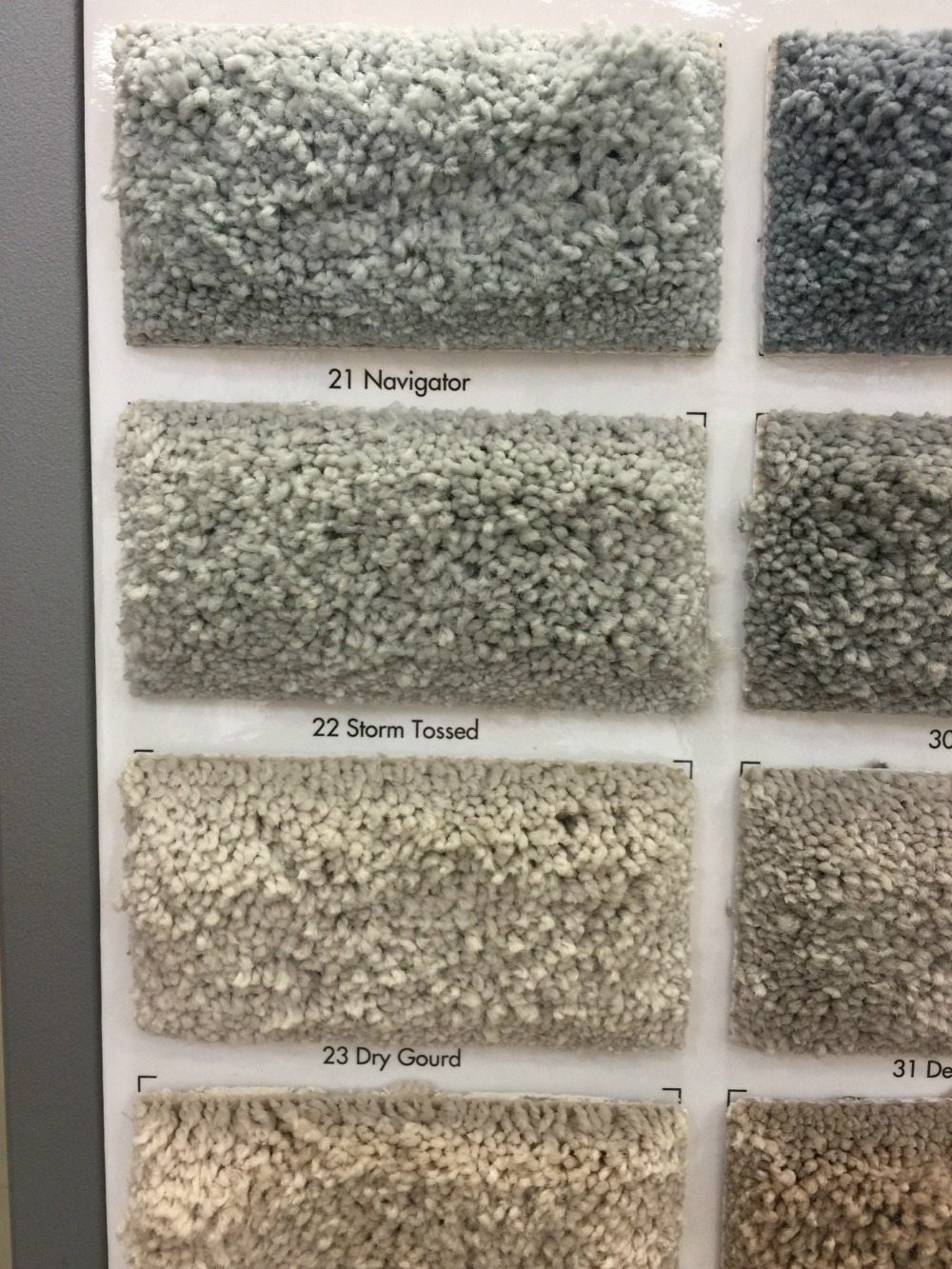 Color Storm Tossed Pet proof Carpet