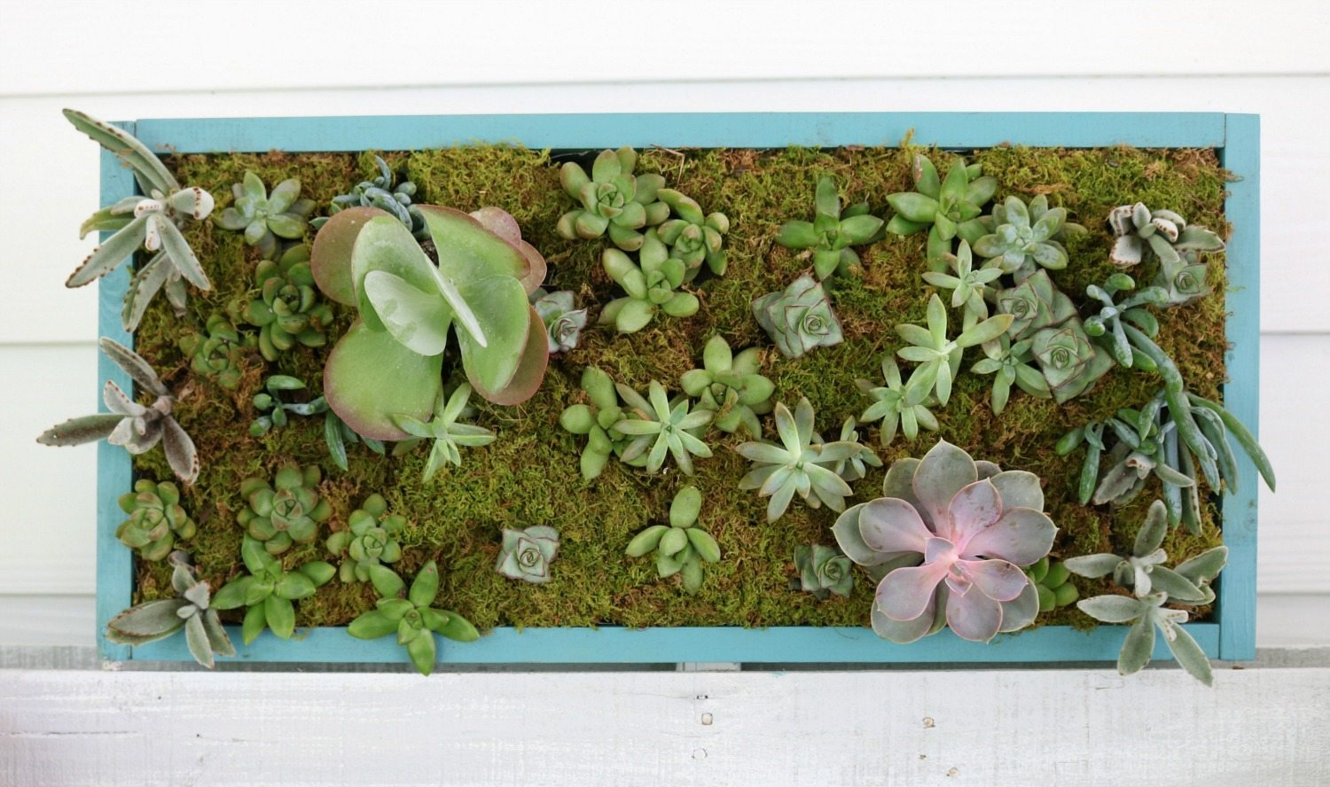 Create this live vertical succulent garden