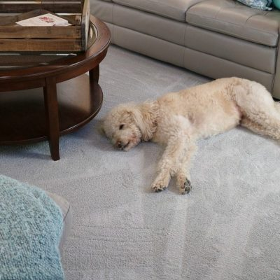 PetProof carpet saves the day and makes my house feel fresh after I vacuum