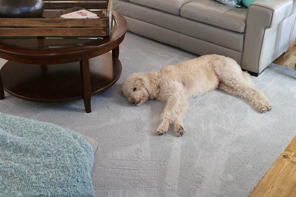 Pet Friendly Carpet Makes Life Easier Refresh Restyle
