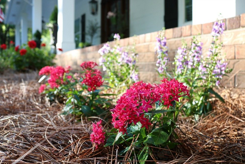Annuals that love full sun are great for the farmhouse garden