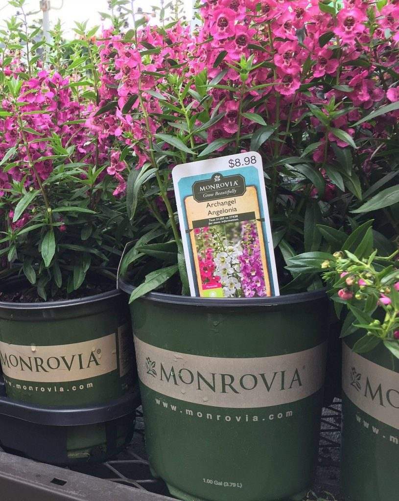 Easy way to add color to your yard drop in a few colorful annuals