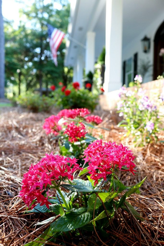 Freshen up the garden with Monrovia plants from Lowe's