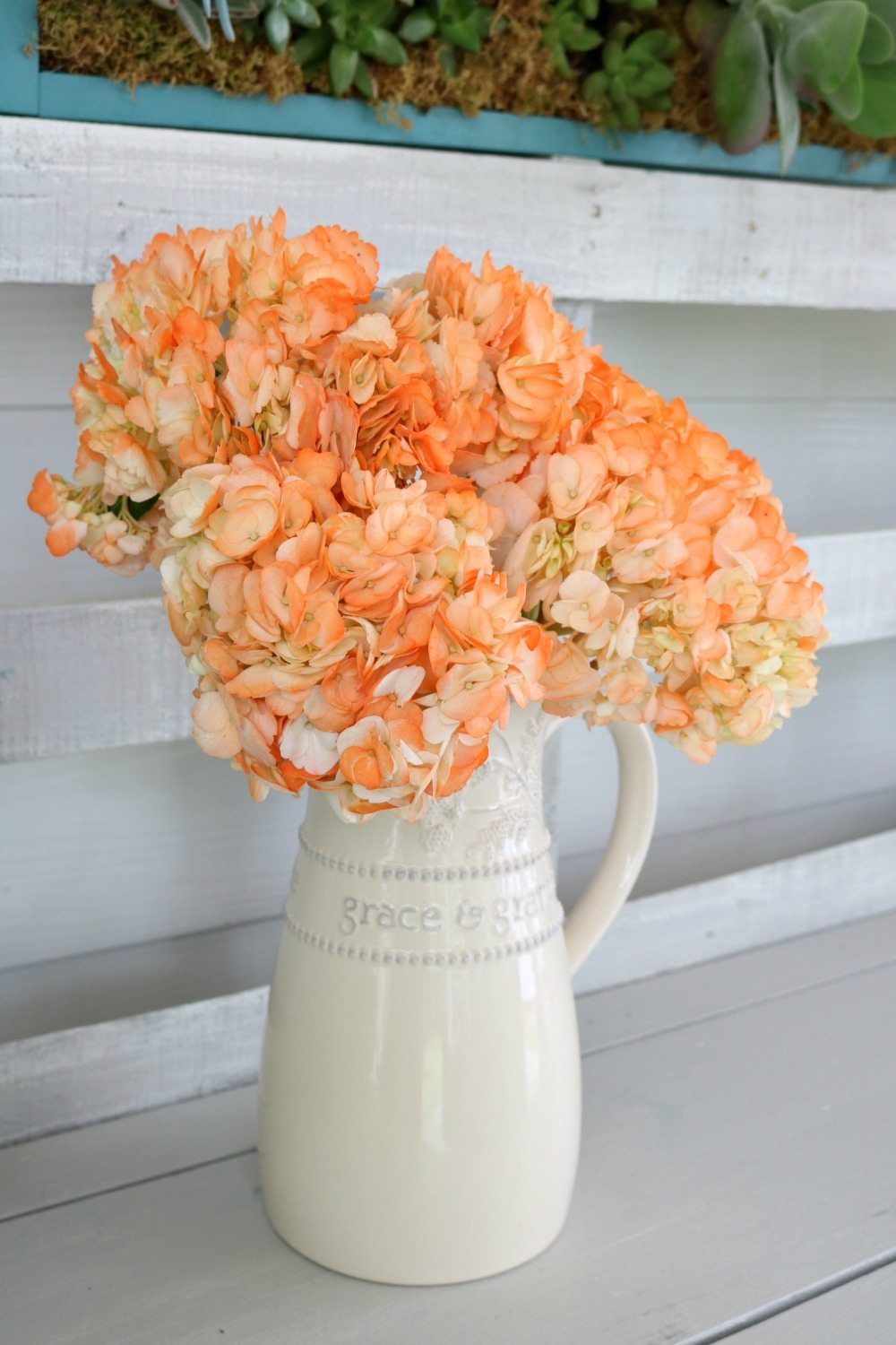 I've never seen Orange hydrangeas