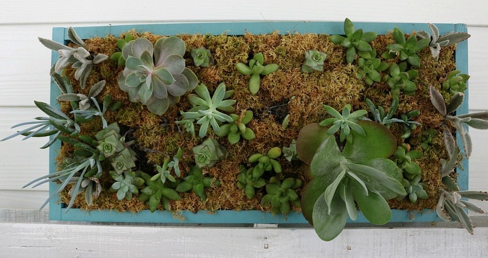 Vertical succulent garden on the porch at Refresh Restyle
