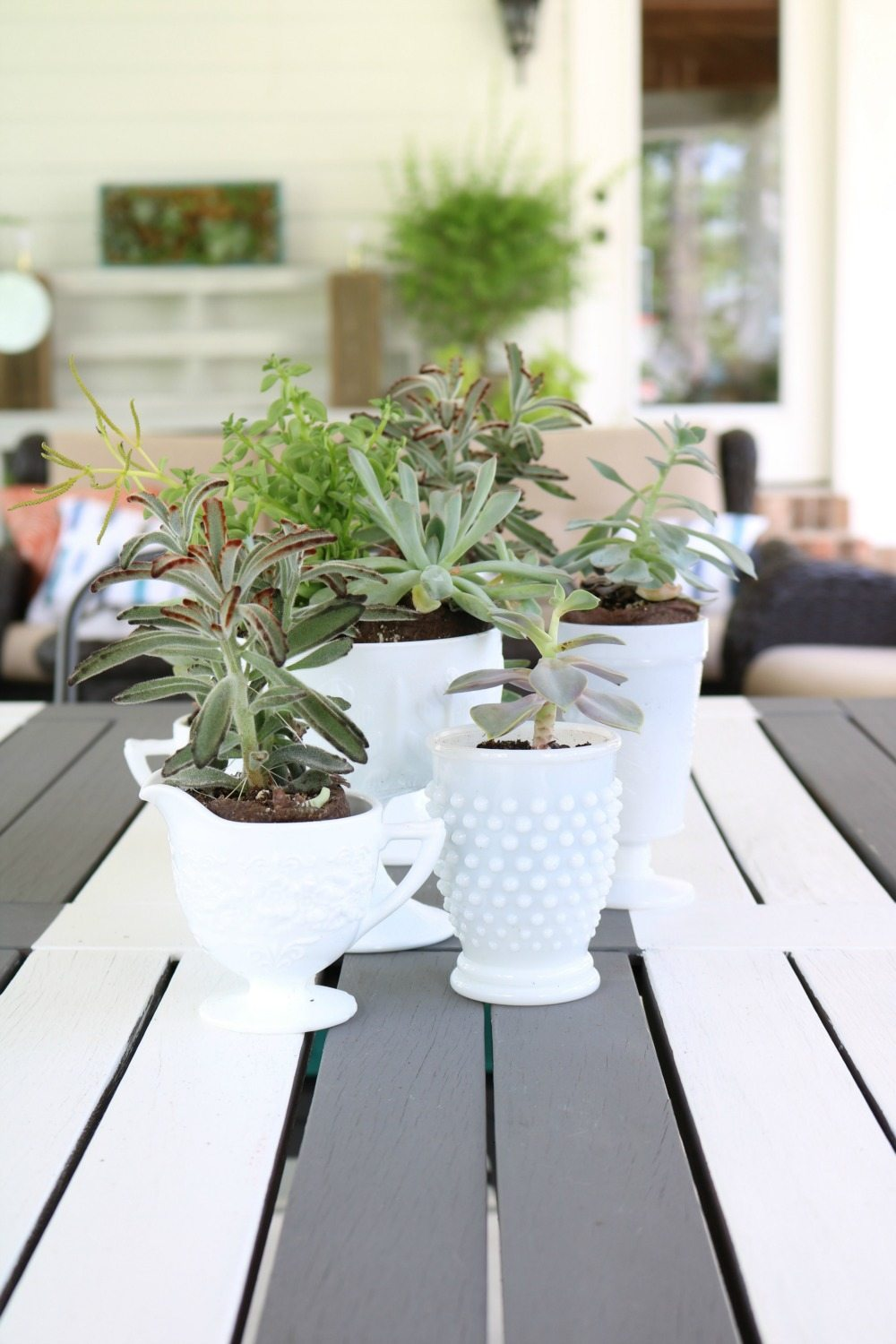 Succulents on the patio table make a great centerpiece