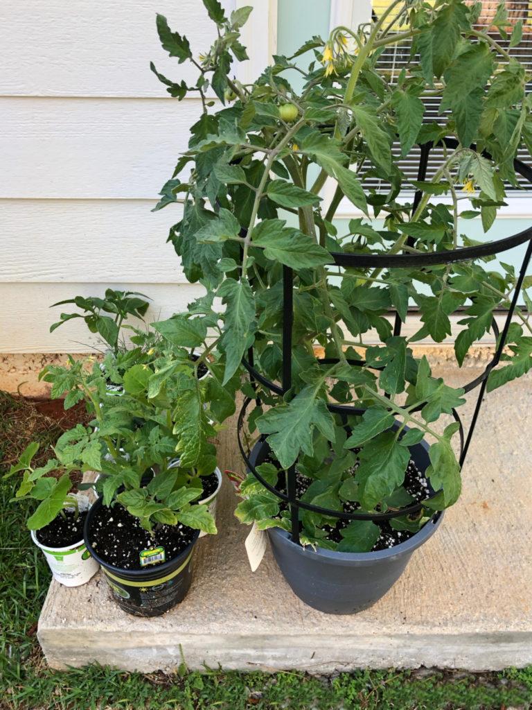 vegetables for garden
