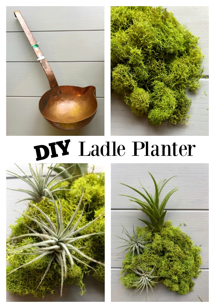 DIY Ladle Planter for Air Plants