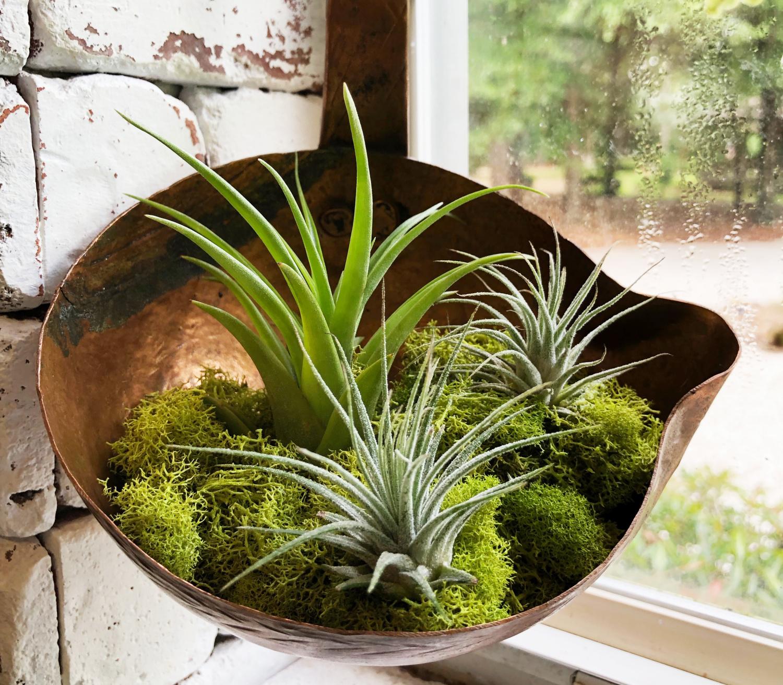 ladle brass planter
